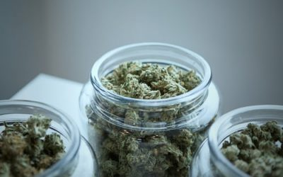 Medical Cannabis Sector Review